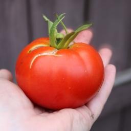 Tomato, To-mah-to